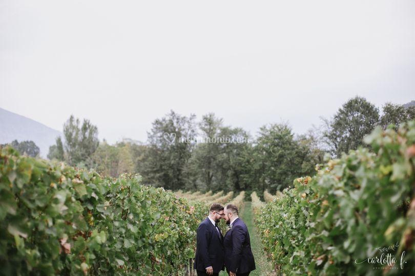 Scorci tra le vigne