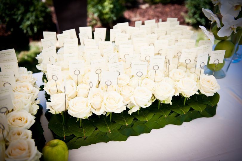 Daniela Colasanto Event & Wedding Planner