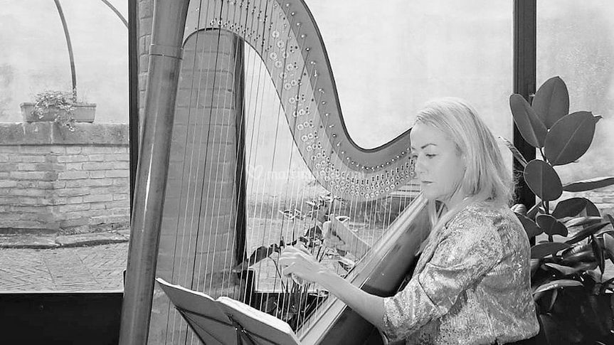 Antonella  Natangelo  Harp