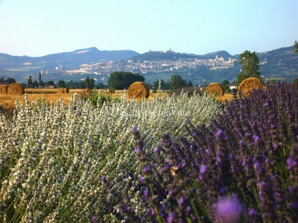 Il Lavandeto di Assisi