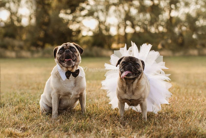Matrimonio a 12 zampe!
