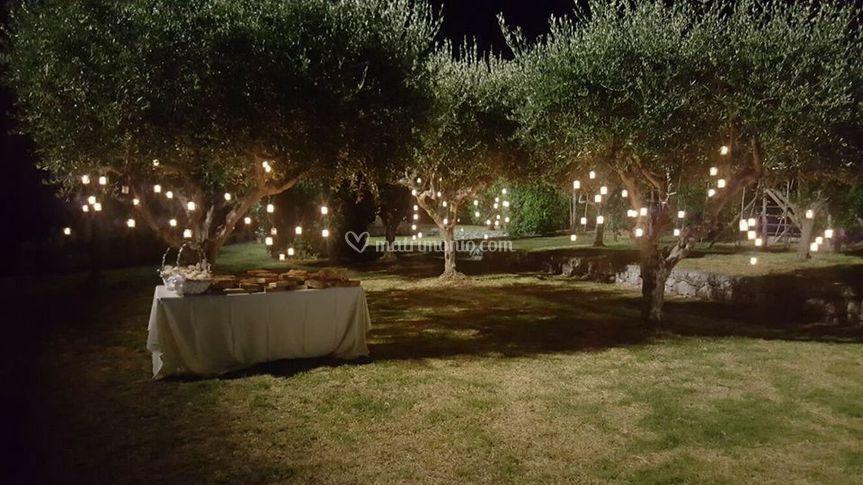 Illuminazione per ulivi: illuminazione ulivo giardino u ulivo in