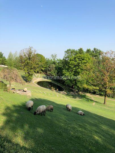 Laghetto e pecore