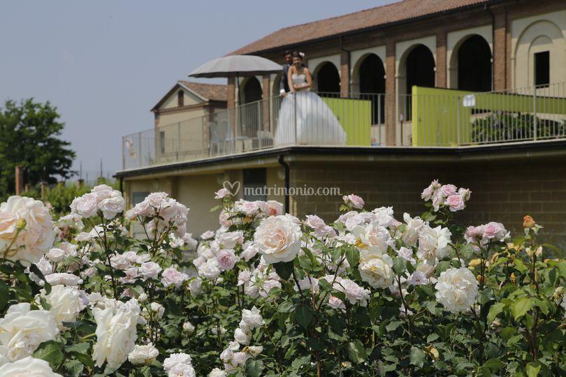 Dal giardino delle rose