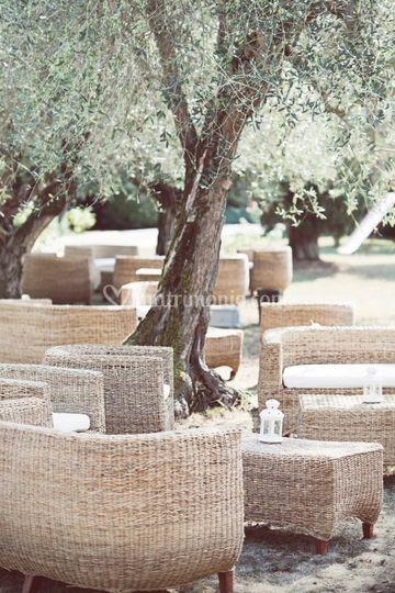 Giardino con ulivi di villa vignappolino foto - Giardino con ulivi ...