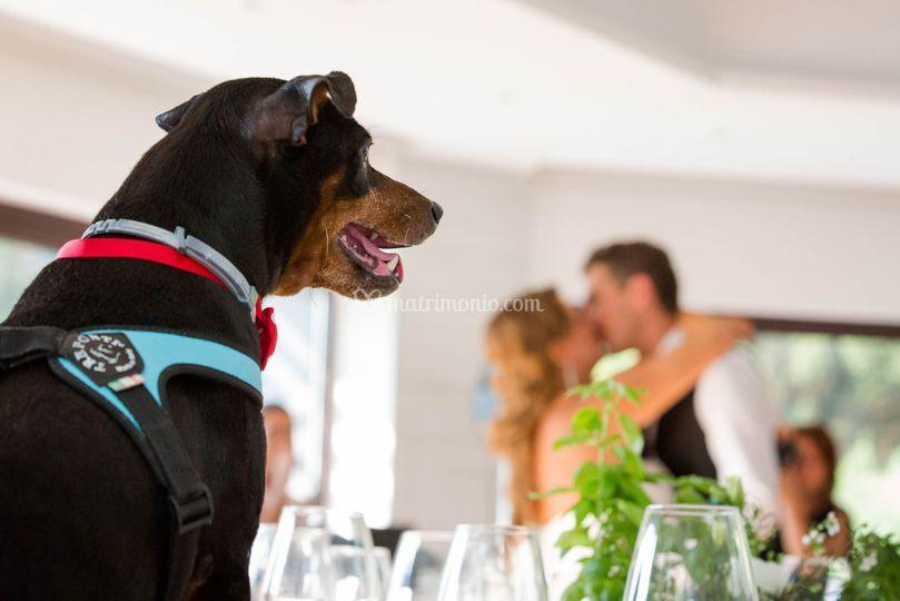 Vista da cane 2