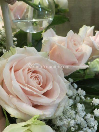 Pubblicazioni Matrimonio Romano Di Lombardia : Pearl di verde idea pina giovanni foto