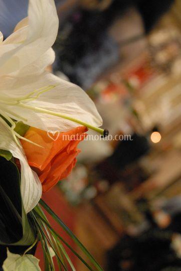 Lilium rose