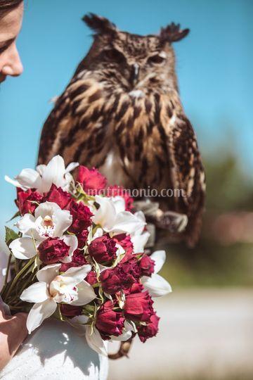 Bouquet e gufo