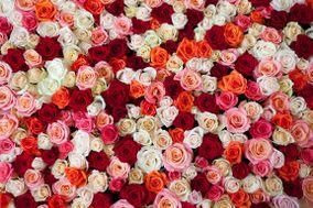 Rose Danielis