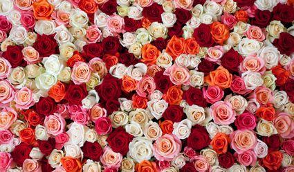 Rose Danielis 1