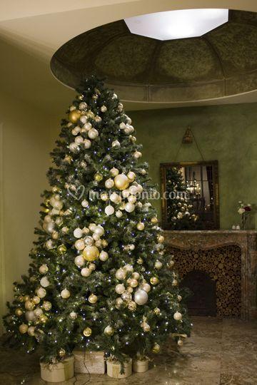 L'albero di Villa Acquaroli