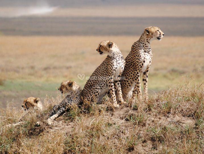 Serengeti National Park -Tanza