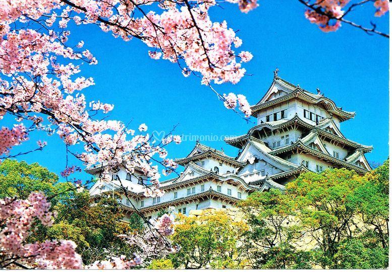 Giappone fioritura dei ciliagi