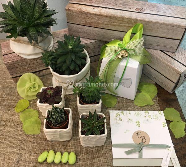 Piantine Green