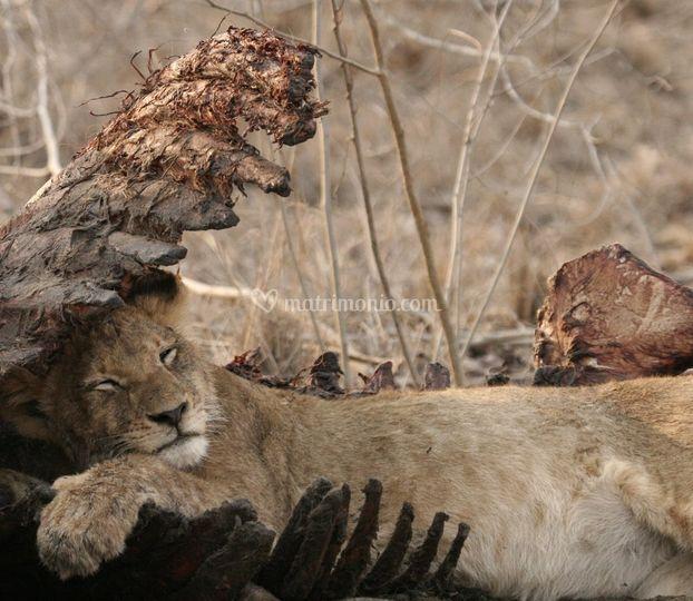 Kruger National Park-SudAfrica