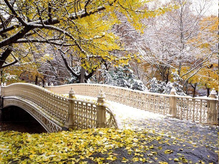 Bow Bridge-Central Park NYC