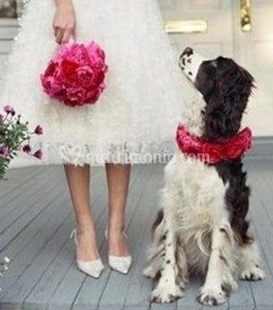 Il tuo matrimonio!