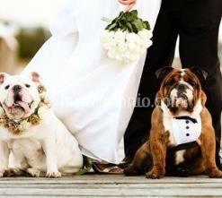 AffidatiAFede Dog Pet Sitter Wedding