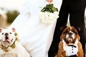 AffidatiAFede Dog Pet Sitter Wedding