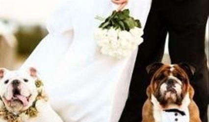 AffidatiAFede Dog Pet Sitter Wedding 1