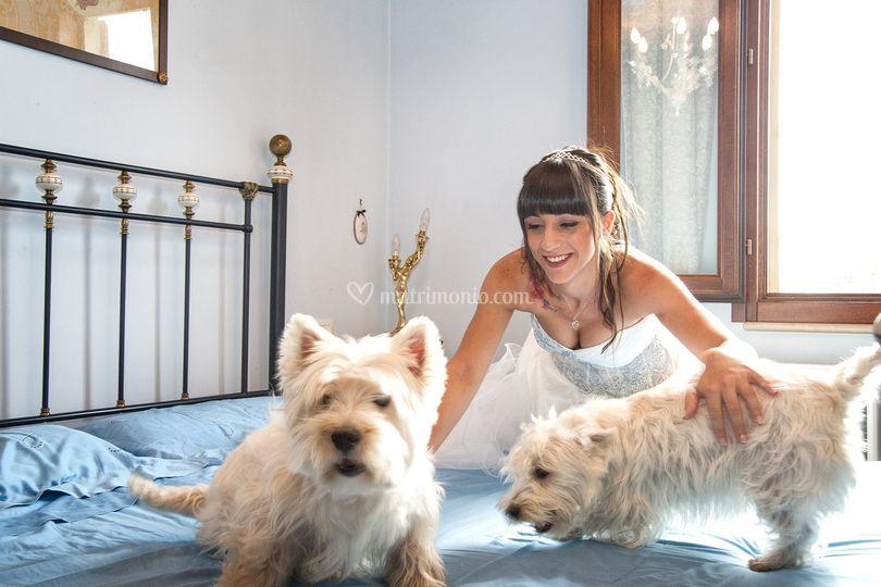 Chiaravalle-Sposa e cuccioli