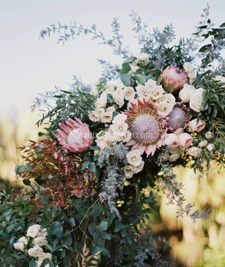 Arco-protea