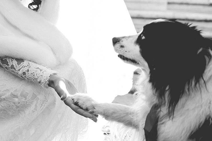 Il cane della sposa