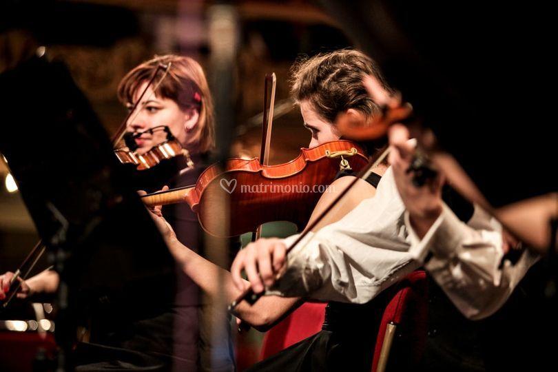 Violino d'amore