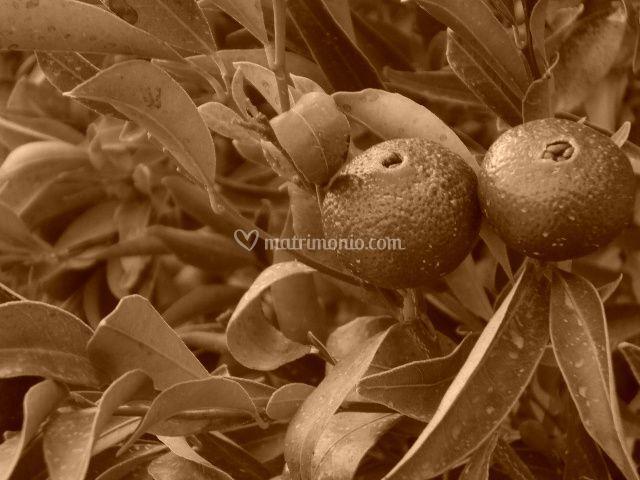 Frutta che decora