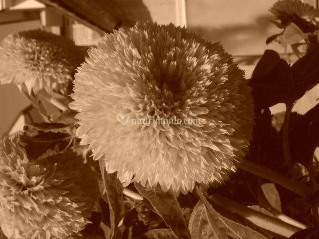 Grandi fiori grandi creazioni