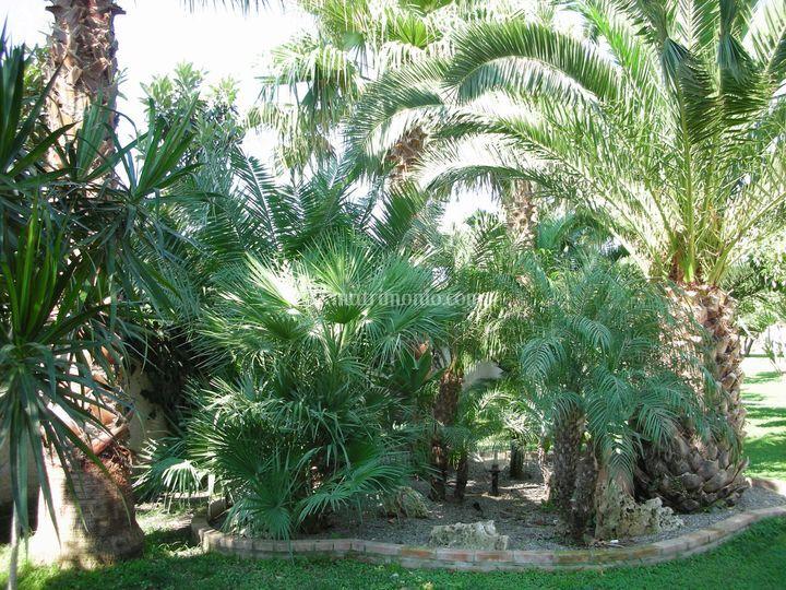 Aiuola piante grasse di villa vida foto 1 for Aiuola piante grasse