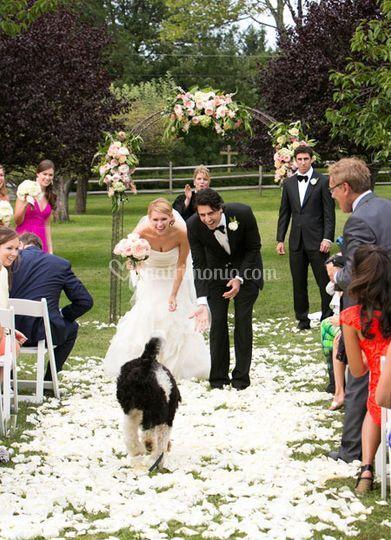 Servizio wedding dog