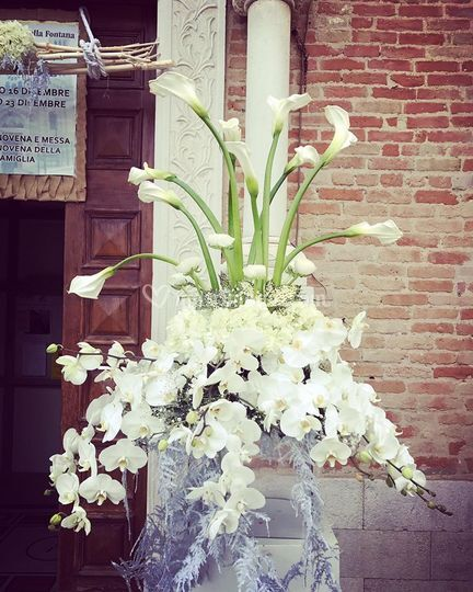 Phalaenopsis inspiration