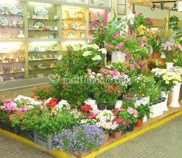 Fiori recisi e piante ornamentali