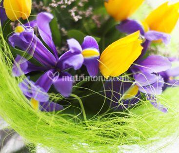 Viola e giallo
