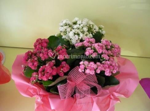 Centrotavola piantine fiorite