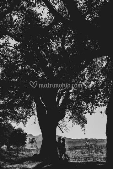 Potito Priore Photographie