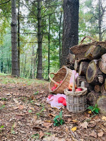 Matrimonio nel bosco: idee