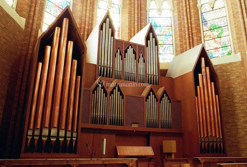 Organo Montebelluna