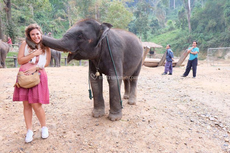 Incontri curiosi a Chiang Mai