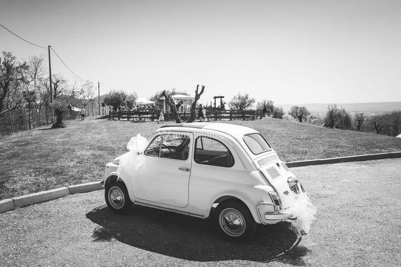 Arrivo al parco degli ulivi