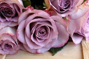 Menta Salvia e Tulipani