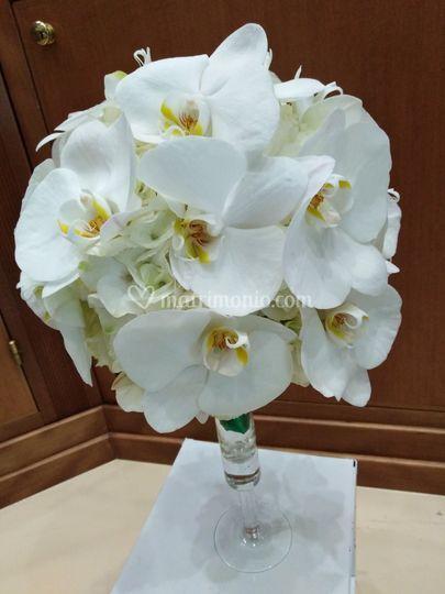 Orchideee