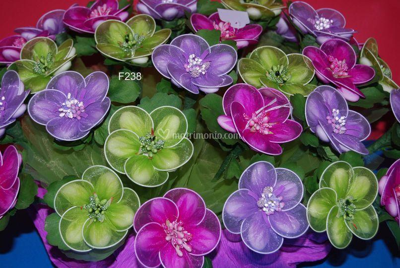 Anemone allegria