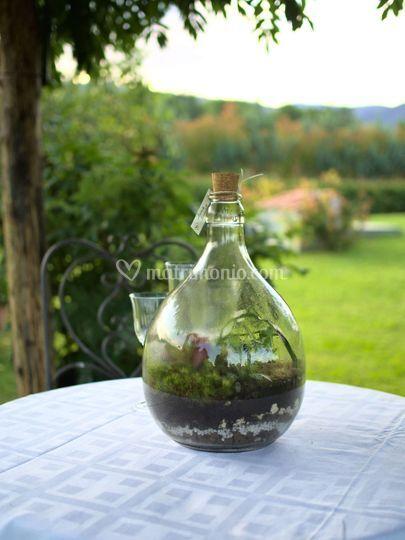 Terrarium damigiana 5 litri