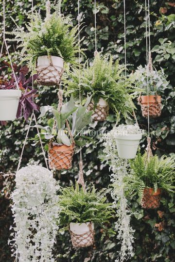 Cerimonia botanica
