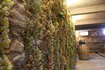 Cantina di Tenuta vinicola Le Forge