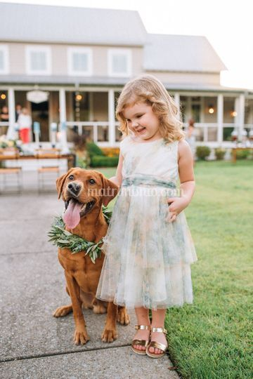 Wedding And Pet's - Stylist