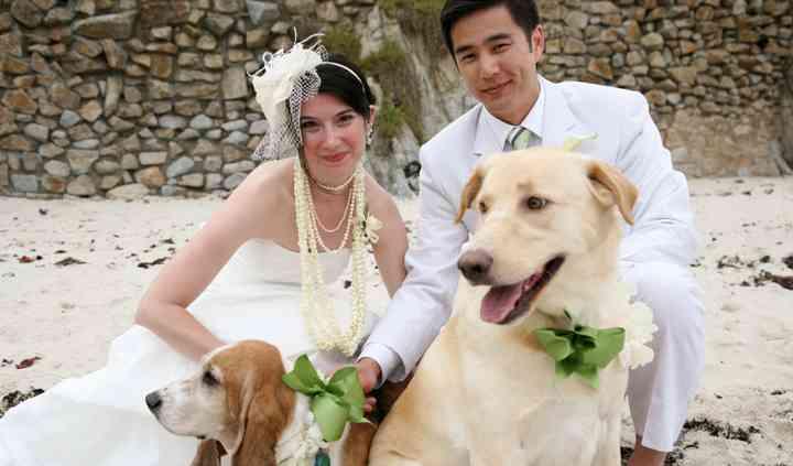 Wedding And Pet's